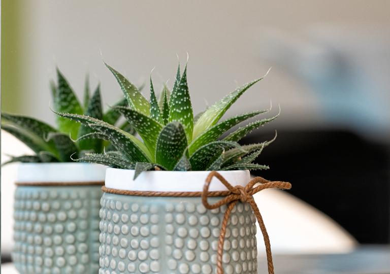 Kaktus_DSC0405_1800x1800_72