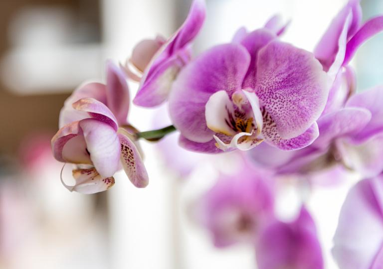 Orchidee_DSC0451_1800x1800_72